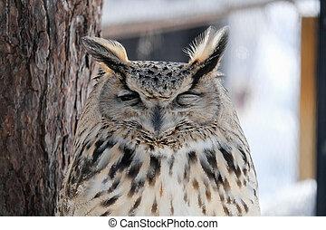 In winter, Cutie Sleeping owl stay under the three. It's beautiful wildlife of the zoo in Hokkaido , Japan.