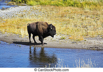 In Yellowstone national park in USA