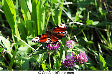 beautiful butterfly on pink flower close up