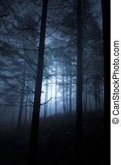 incandescent, forêt