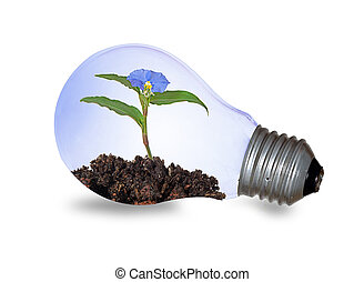Incandescent light bulb with a flower