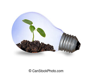 Incandescent light bulb with a plant as the filament