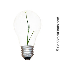 Incandescent light bulb with a wheat plant as the filament
