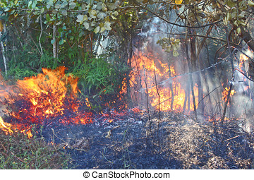 incendio descontrolado, bosque