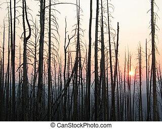 incendio descontrolado, después, ocaso, árboles