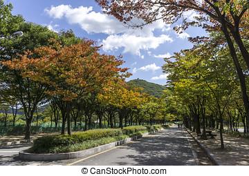 Incheon Grand Park early autumn - A bike road in incheon...