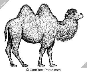 incidere, isolato, nero, bianco, cammello, illustrazione