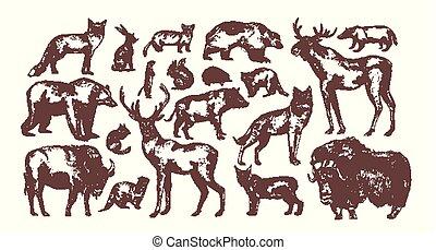 incisione, animali, illustration., fondo., vendemmia, carnivoro, isolato, fascio, erbivoro, elegante, vettore, disegni, mano, mammiferi, collezione, disegnato, bianco, europeo, style., foresta