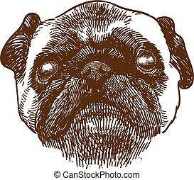 incisione, anticaglia, testa, cane pug, illustrazione