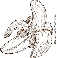 incisione, banana, illustrazione