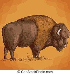 incisione, bisonte, illustrazione