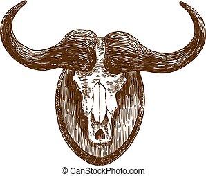 incisione, bufalo, illustrazione, cranio, disegno