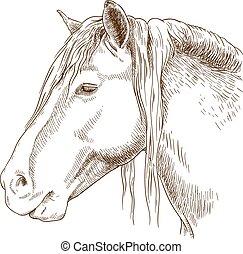 incisione, cavallo, testa, illustrazione