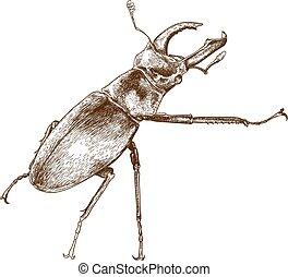 incisione, cervo, illustrazione, scarabeo