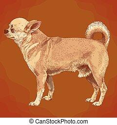 incisione, chihuahua, cane, illustrazione