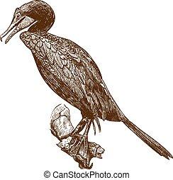 incisione, cormorano, disegno, illustrazione
