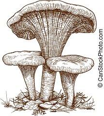incisione, funghi, illustrazione