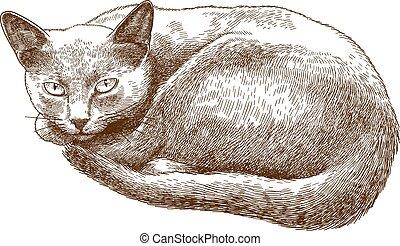 incisione, gatto, illustrazione, anticaglia