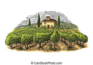 incisione, hills., campi, villa, vigneto, vettore, paesaggio rurale