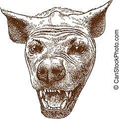 incisione, maculato, testa, iena, illustrazione