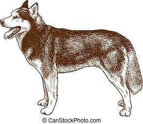 incisione, rauco, cane, illustrazione