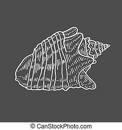 incisione, seashell, spirale, illustrazione