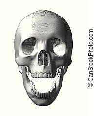 incisione, sfondo bianco, isolato, cranio