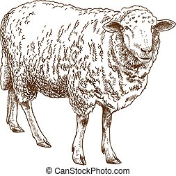 incisione, sheep, disegno, illustrazione