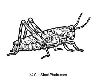 incisione, stile, illustration., graffio, cavalletta, locusta, mano, imitation., insetto, vettore, nero, asse, disegnato, bianco, image.