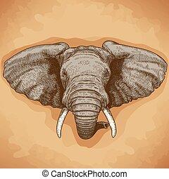 incisione, testa, elefante