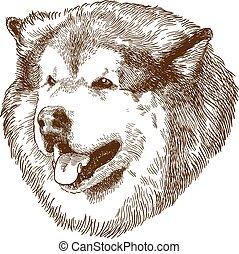 incisione, testa grande, cane, illustrazione