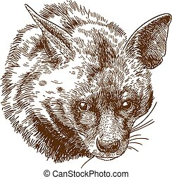 incisione, testa iena, illustrazione