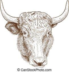 incisione, testa, illustrazione, yak