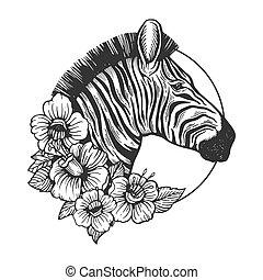 incisione, testa, vettore, zebra, animale
