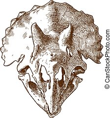 incisione, triceratops, illustrazione, cranio