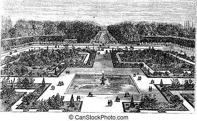 incisione, vendemmia, parco, fontainebleau, francia