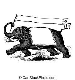 incisione, vendemmia, portante, bandiera, elefante