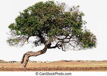inclinação, árvore