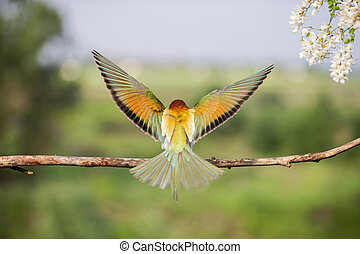 incredible colors on the wings of a wild bird