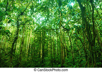 Incredible tropical green forest