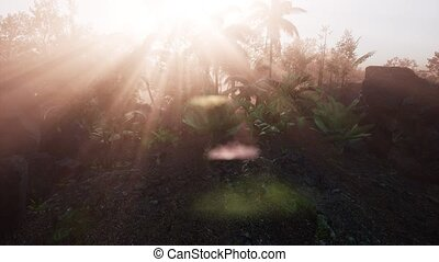 Incredible tropical green forest view with sun flare in...