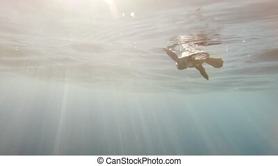 Incredibly rare footage of a baby sea turtle after entering...