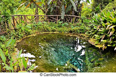 Incredibly Vibrant Clear Blue Water Pond in tropical forest