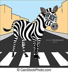 incrocio, zebra