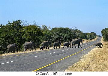 incrocio, zimbabwe, -, strada, elefanti