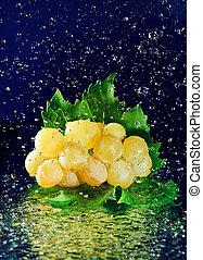 indítvány, zöld, víz, zöld szőlő, betömött, fehér,...