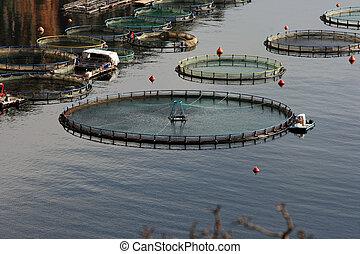 indústria pesca