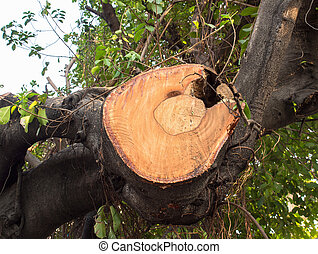 Indentation of old huge branch tree which is cover on living...