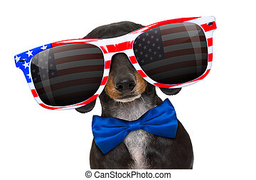 independence day 4th of july dog - dachshund sausage dog...