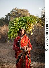 indiër, villager, vrouw, verdragend, gree